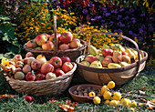 Baskets of apples, pears, peach and quail
