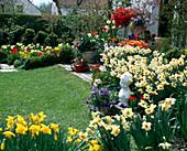 Frühlingsgarten mit NARCISSUS 'Cragford',