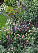 Beet mit Rosa, Salvia, Allium, Geranium, Anchusa