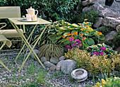 Gelblaubige Schattenecke mit Carex hachijoensis 'Evergold'