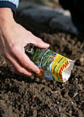 Aussaat Feldsalat: Feldsalat in die Rillen säen
