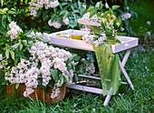 Syringa vulgaris / weißer Flieder im Korb und auf Klapptisch,