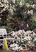 Aquilegia 'Spring Magic' / Akelei, Syringa / Flieder, Viburnum