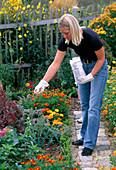 Junge Frau düngt im Bauerngarten