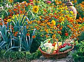 Tagetes / Studentenblumen, Allium porrum / Lauch
