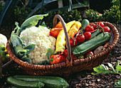 Brassica / Blumenkohl, Capsicum / Paprika