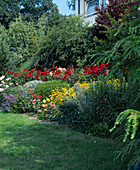 Hanggarten : Rosa (Rosen, Beetrosen), Achillea (Schafgarbe)