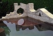 Garten Mumme