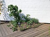 Blumenbeet Integriert IN Einer Holzterrasse