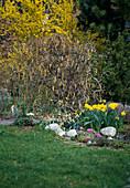 Frühlingsgarten mit: CORYLUS AVELLANA 'CONTORTA'
