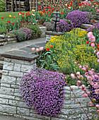 Gemauerte Beete mit Blaukissen, Tulpen und Steinkraut