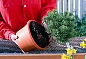 Dauerhafte Bepflanzung mit Gehoelzen