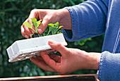 1. Step: JUNGPFLANZE (easy PLANT, Baldur)