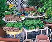 KEIMLINGE UND Jungpflanzen (easy PLANT
