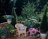 BUCHS,HOSTA,Hydrangea / Hortensie,