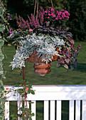 Herbstzauberampel: Artemisia splendens, Salvia officinalis 'Pupurascens', Ajuga