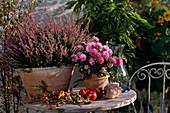 CALLUNA VULGARIS, DENDRANTHEMA indicum, (Chrysantheme)