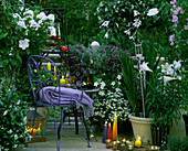Abendbalkon (Duft): MONDWINDE, Phlox, NICOTIANA,