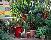 Terrasse mit TOMATEN, Salvia / Salbei,