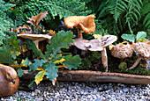 Tonschale mit diversen Waldpilzen, Moos und Eichenblattzweig