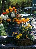 Arrangement mit Tulpen, Hyazinthen, Goldlack, Primeln und Stiefmütterchen