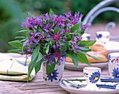Centaurea montana / Bergflockenblume