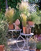 Gräser: Stipa tenacissima 'Fountain', Hordeum jubatum, Melica altissima