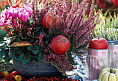 Cyclamen persicum / Alpenveilchen, Calluna vulgaris 'Aphrodite'