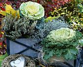 Brassica oleracea, Calluna vulgaris 'Long White', Kranz aus Calluna