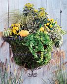 Rostfreier Drahtkorb (Wirework), Calluna vulgaris 'Sandy', 'Melanie', Lysimachia