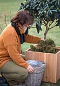 Ballenschutz für Rhododenron