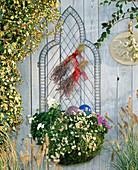 Rostfreier Drahtkorb (Wirework), Pelargonium, Lobularia,