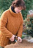 Ballenschutz für Pieris japonica 1.Step: Kokosmatte in Form schneiden