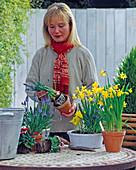 Schale mit Iris, Narzissen und Bellis bepflanzen 1/2