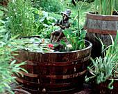 Wasser-Holzfaß mit Nymphaea 'Froebelii' (Schlechtwetter-