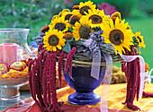 Helianthus annuus / Sonnenblume,