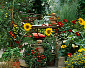 Ampeltomate 'Tumbler', Tomate 'Tigrella', Basilikum,Helianthus