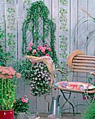 Drahtkorb als Wandgefäß bepflanzt mit Hedera (Efeu), Dahlien,