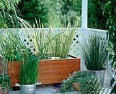 Balkon mit Wasserpflanzen