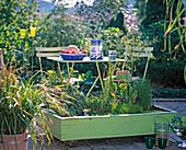 Holzcontainer mit Folie ausgekleidet u. bepflanzt mit Alisma,