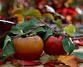 Kakifrucht / Diospyros in reifem Zustand
