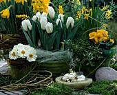 Kleines Tischarrangement mit Narcissus 'Goldmedaille'
