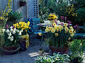 Frühlingsduftterrasse Narcissus poeticus 'Actaea', Narcissus-