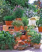 Holzetagere mit Kräutern: von oben links: Allium / Schnittlauch,