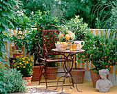 Balkon mit mediterranem Flair - Ananasminze