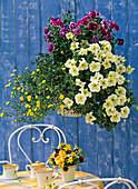Blumenampel: Petunia grandiflora 'Prism Sunshine'