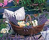 Korb mit frisch geschnittenem Lavandula (Lavendel)