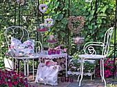 Sitzplatz im Pavillon auf der Terrasse : Aristolochia (Pfeifenwinde)