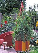 Holzkübel orange, rot, gelb, angestrichen