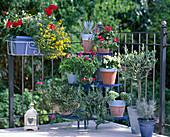 Pendler-Balkon mit pflegeleichten Pflanzen; Agave, Pelar-